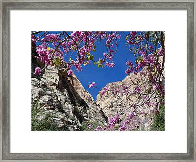 Ice Box Canyon In April Framed Print by Alan Socolik