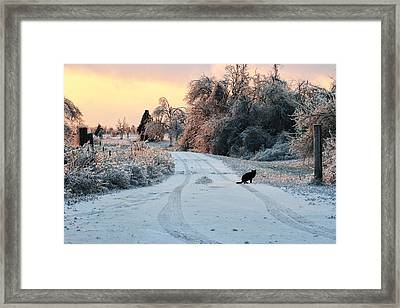 Ice Cat Framed Print by Ryan Burton