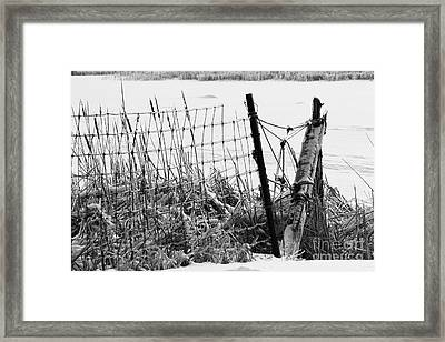 Ice Coated Wire Fence And Rushes After A Winter Storm Framed Print