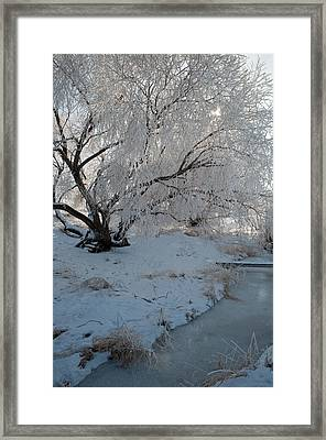 Ice Covered Tree And Creek In Montana Framed Print