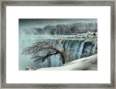 Ice Covered Tree Framed Print by Douglas Pike