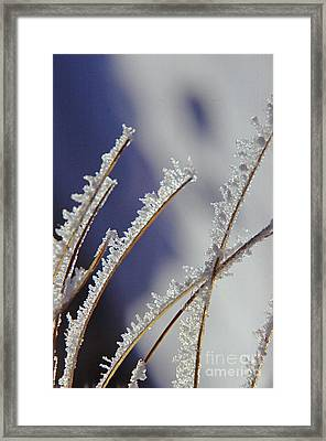 Framed Print featuring the photograph Ice Crystals On Fireweed Fairbanks  Alaska By Pat Hathaway 1969 by California Views Mr Pat Hathaway Archives
