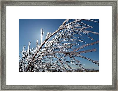 Ice Crystals On Tree Branches, Iceland Framed Print by Panoramic Images