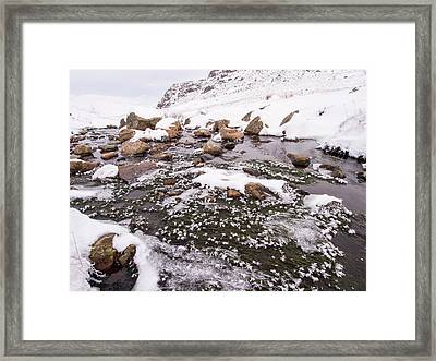 Ice Crystals On Water Weed In A Stream Framed Print