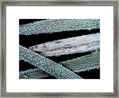 Ice Crystals Framed Print by Shirley Sirois