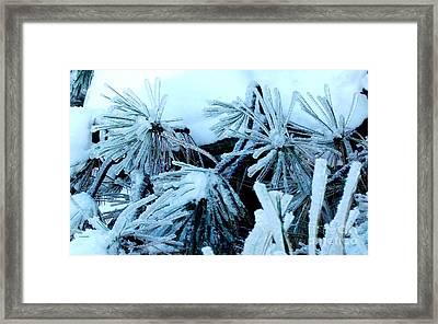 Ice Daisies Framed Print