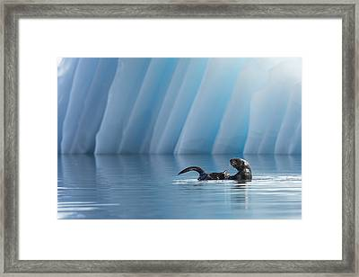 Otter Pop Framed Print