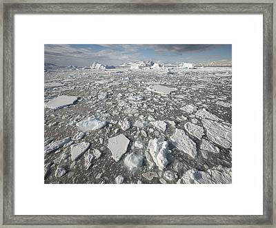 Ice Floes Antarctica Framed Print
