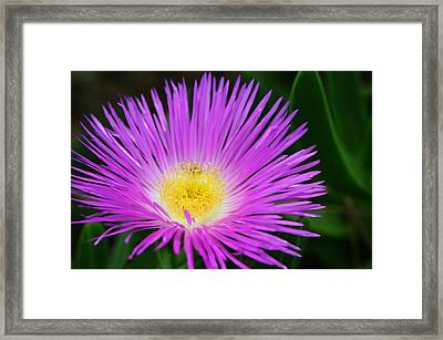 Ice Ice Baby - Flower Photography By Sharon Cummings Framed Print