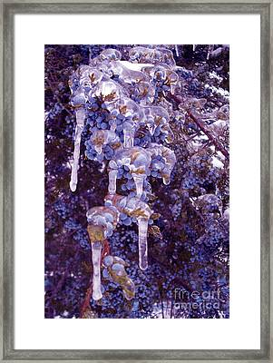 Ice In Purple Framed Print by R McLellan