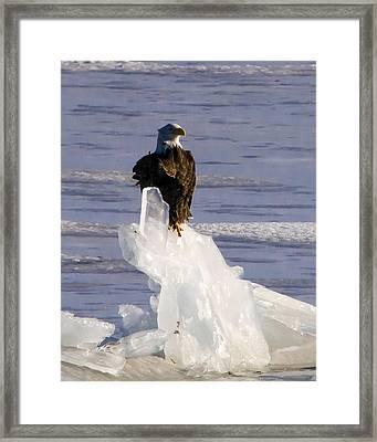 Ice King Framed Print by Joe Scott