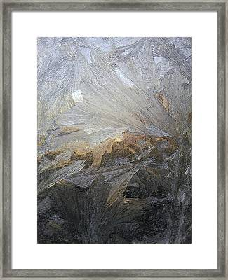 Ice Lillies Framed Print by Jaime Neo