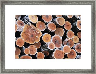 Ice Logs Framed Print