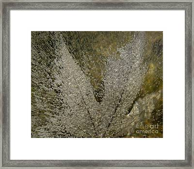 Ice Maple Framed Print