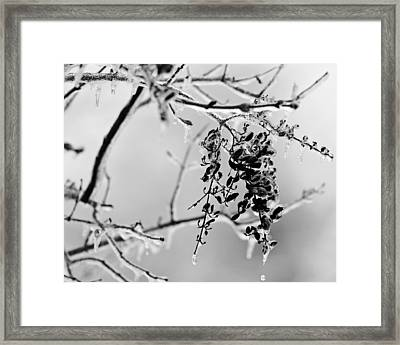 Ice Melting Framed Print by Sandy Keeton