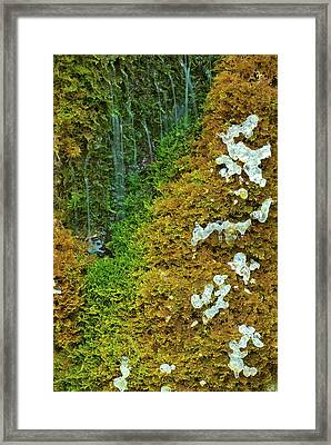 Ice On A Moss Framed Print by Thomas Aichinger