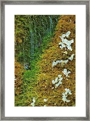 Ice On A Moss Framed Print