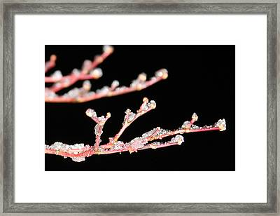 Framed Print featuring the photograph Ice On A Tree by Vadim Levin