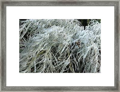 Ice On Bamboo Leaves Framed Print by Daniel Reed