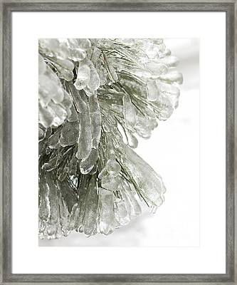Ice On Pine Branches Framed Print