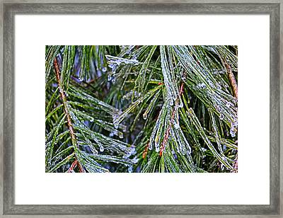 Ice On Pine Needles  Framed Print by Daniel Reed