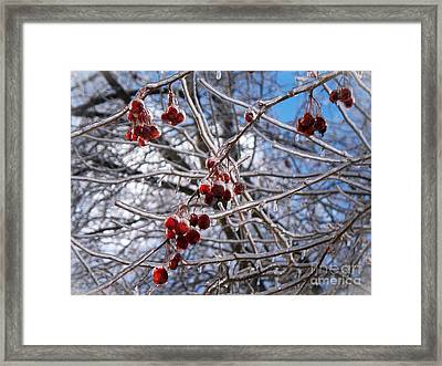 Ice On The Crab-apples Framed Print by Joy Nichols