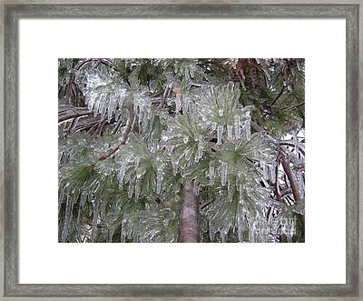 Ice Pine Framed Print by Deborah DeLaBarre