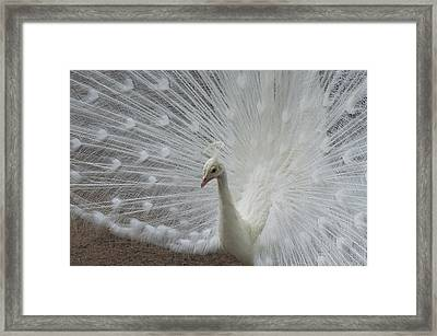 Ice Princess Framed Print by Julie Smith