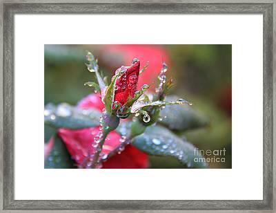 Ice Roses Framed Print by Leslie Kirk