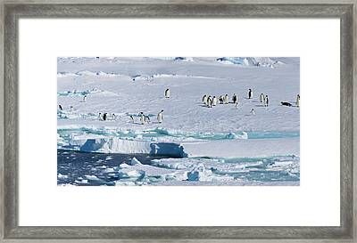 Ice Shelf, Antarctica Framed Print by Janet Muir