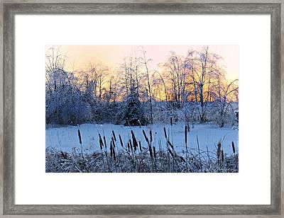 Ice Storm 2013/2 Framed Print