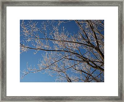 Ice Storm Branches Framed Print