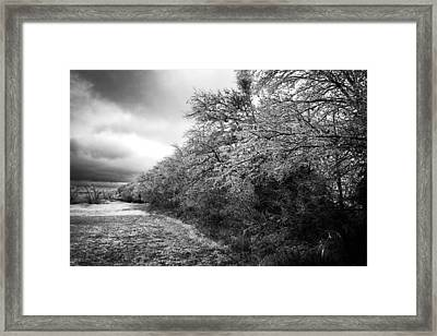 Ice Storm Framed Print by Mark Alder