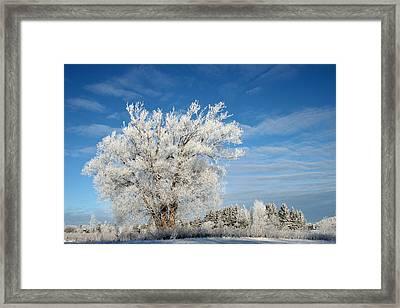 Ice Tree Framed Print by Brady D Hebert