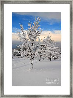 Ice Tree Framed Print by Fred Cerbini