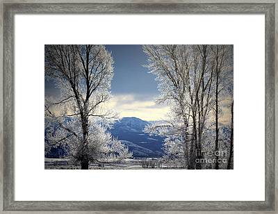 Ice Trees Framed Print