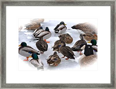 Ice Walkers Framed Print by Catherine Renzini