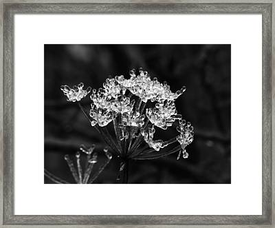 Ice Weed Framed Print