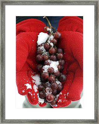 Ice Wine Grapes And Red Gloves Framed Print