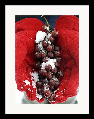 Icewine Framed Prints