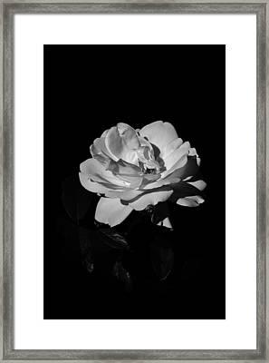 Iceberg Rose Framed Print by Charles Lupica