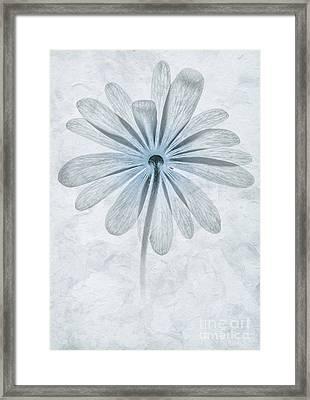 Iced Anemone Framed Print by John Edwards
