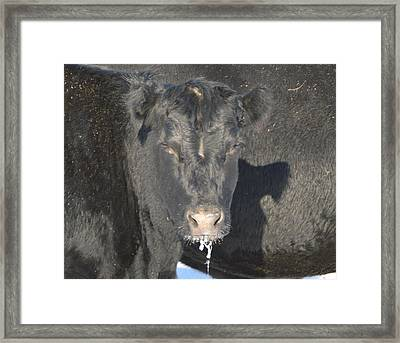 Iced Beef Framed Print by Bonfire Photography