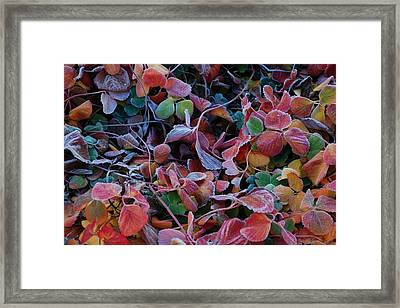 Iced Berries Framed Print