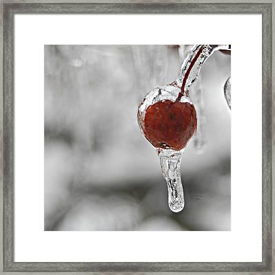 Iced Berry Framed Print by Trish Tritz