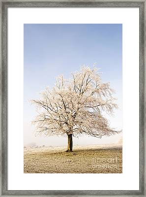 Iced Tree Framed Print by Anne Gilbert