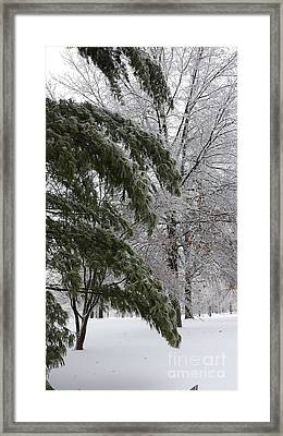 Iced Trees Framed Print