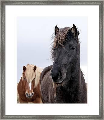 Iceland Horses Framed Print