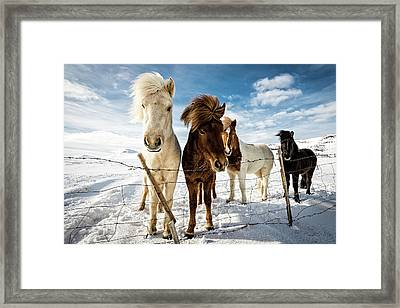 Icelandic Hair Style Framed Print