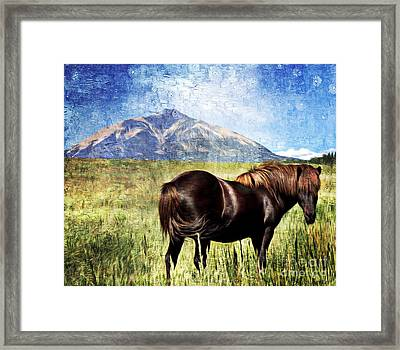 Icelandic Horse Framed Print by Barbara Chichester